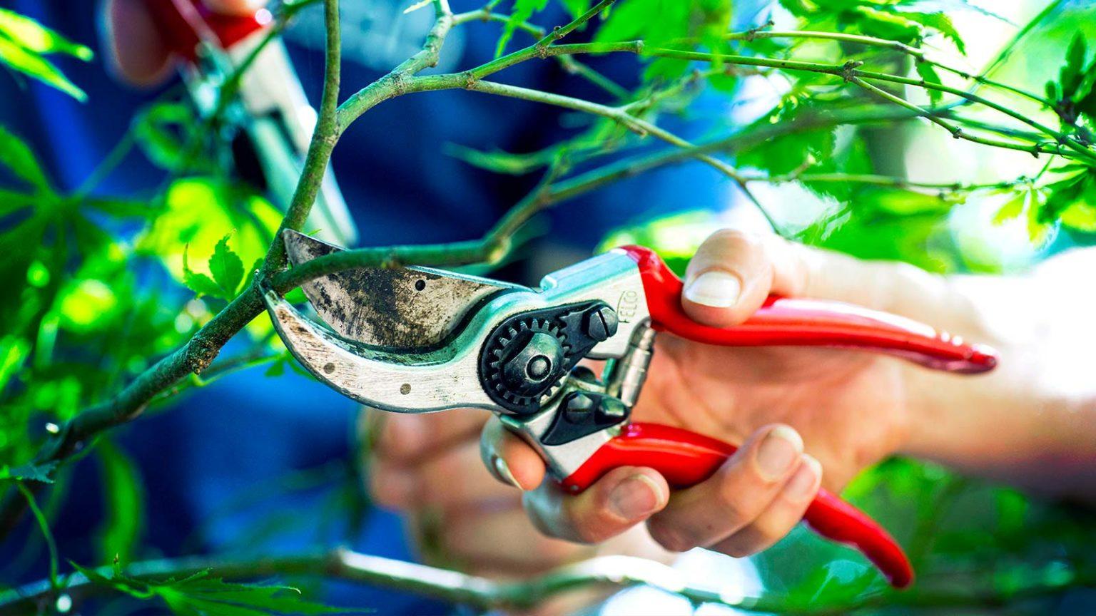 Tree Pruning in Charleston SC