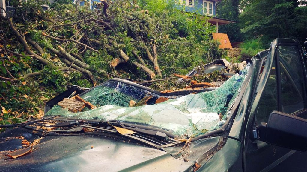 Tree cleanup in Charleston